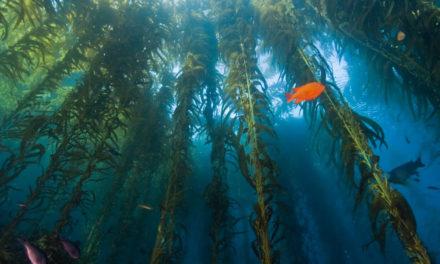 National Marine Month: Celebrating Biodiversity Beneath the Waves