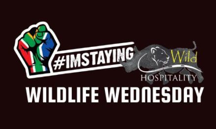 #ImStaying Announces #WildlifeWednesday Conservation Initiative