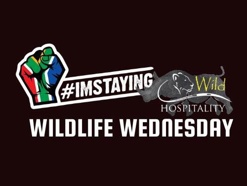 #ImStaying Announces #WildlifeWednesday Conservation Initiative